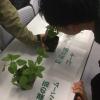 生活科 植物の栽培